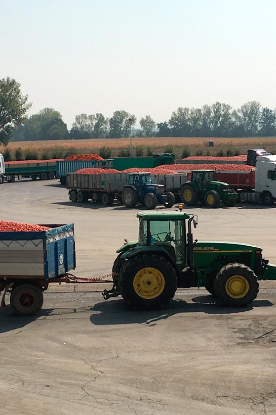 Les camions en attente des test de qualité