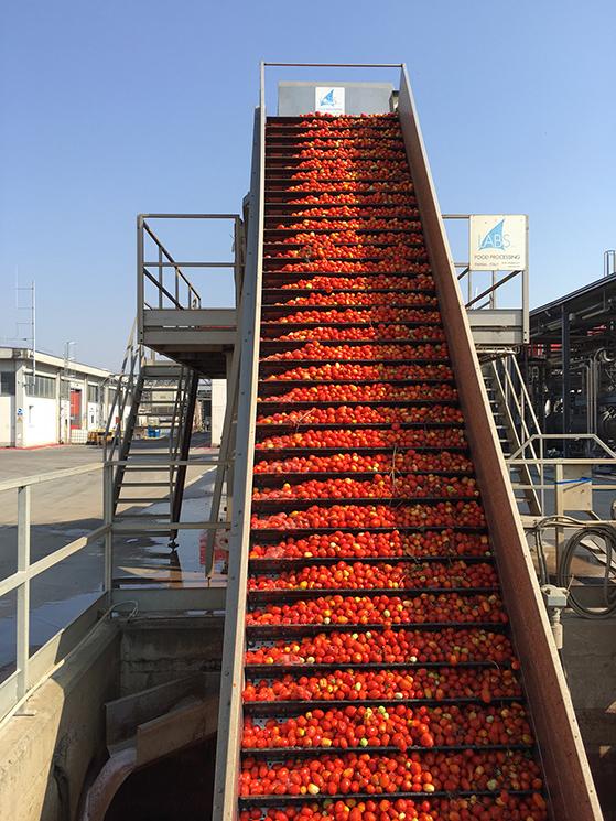Chargement des tomates