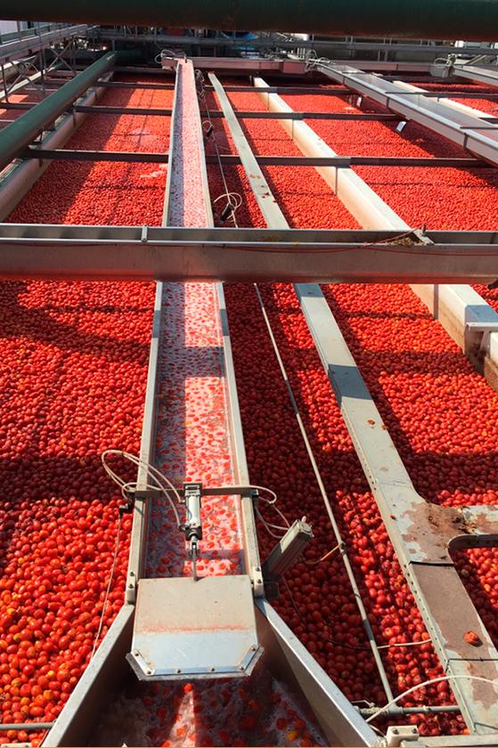 Chaine de lavage des tomates chez Mutti